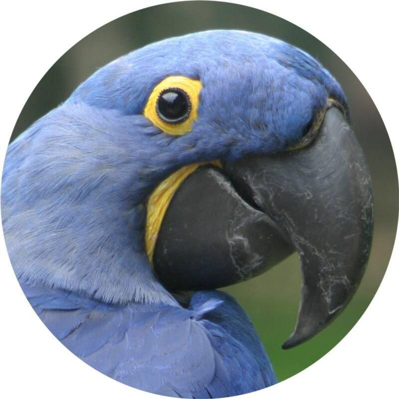 ENJOYED BY LARGE MACAW (GREEN-WINGED, HYACINTHS), LARGE COCKATOO (MOLUCCAN, PALM), ANY HUGE CHEWING PARROT